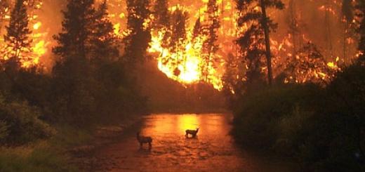 feu-de-forêt